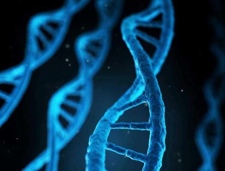 DE DNA REIS